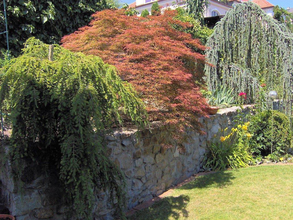 Aj-nekvitnúce-rastliny-môžu-mať-pestré-farby-1024x768