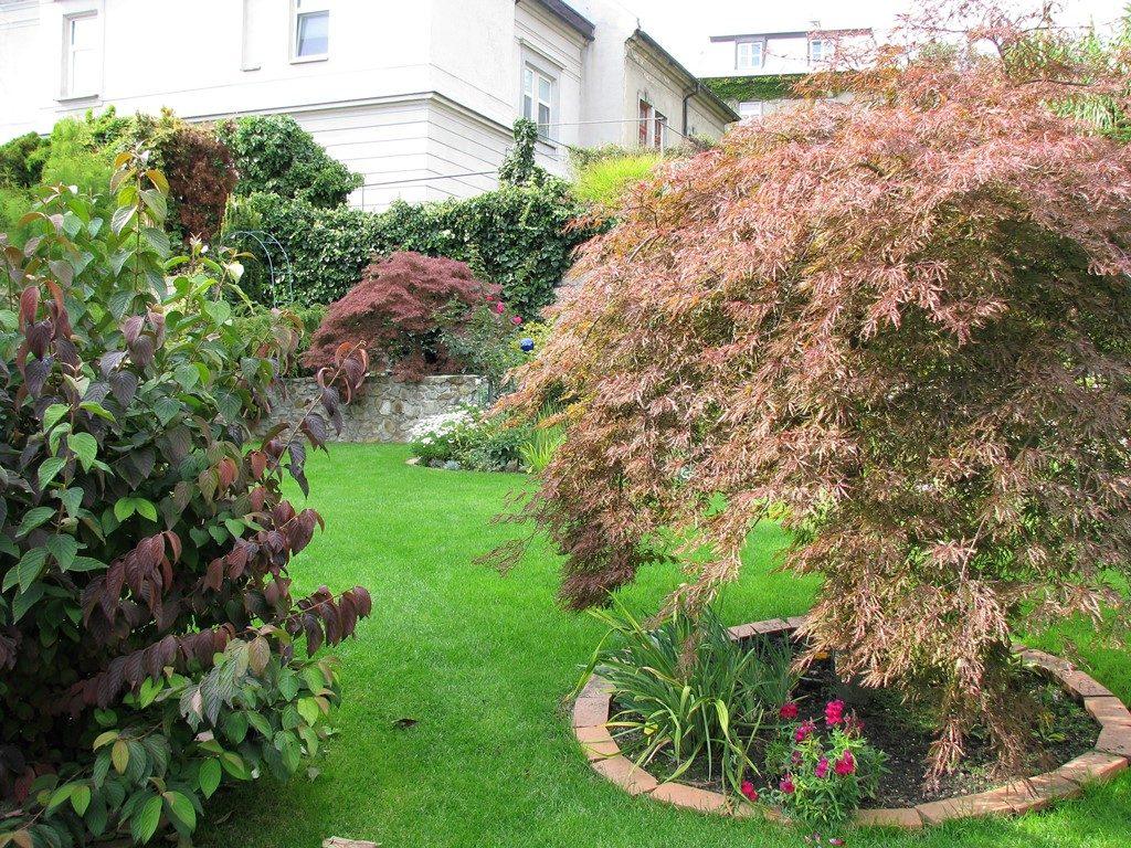 Japonským-javorom-sa-v-záhrade-darí-aj-po-rokoch-1024x768