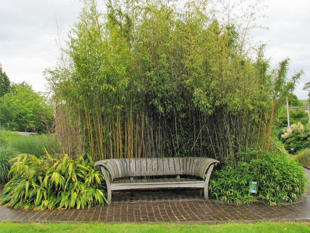 Lavička-v-závetrí-bambusu-1024x768