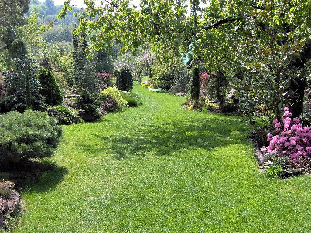 Medzi-výsadbami-ihličnatých-a-kvitnúcich-listnatých-drevín-sa-kľukatí-trávnik-1024x768