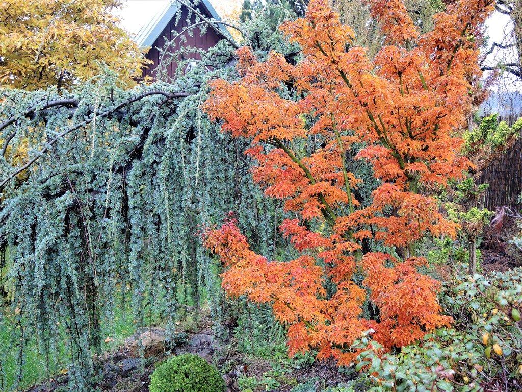 Ohnivá-farba-javorov-rozžiari-aj-pochmúrne-jesenné-dni-1024x768