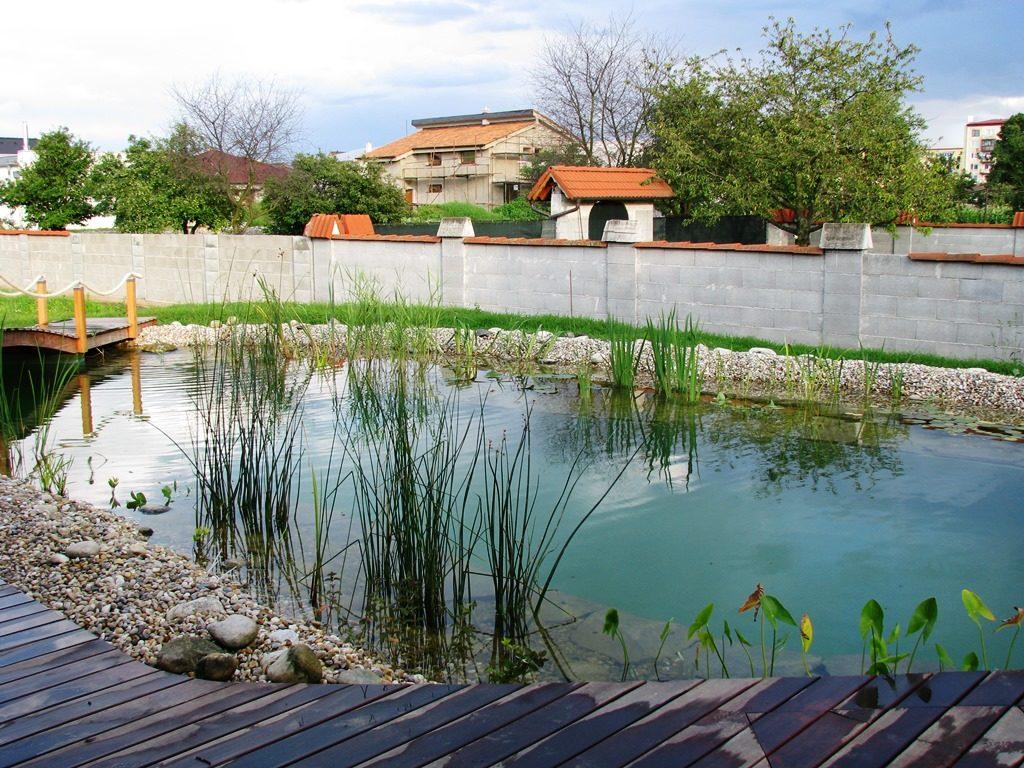 Prírodné-kúpacie-jazierko-prvý-rok-po-vybudovaní-1024x768