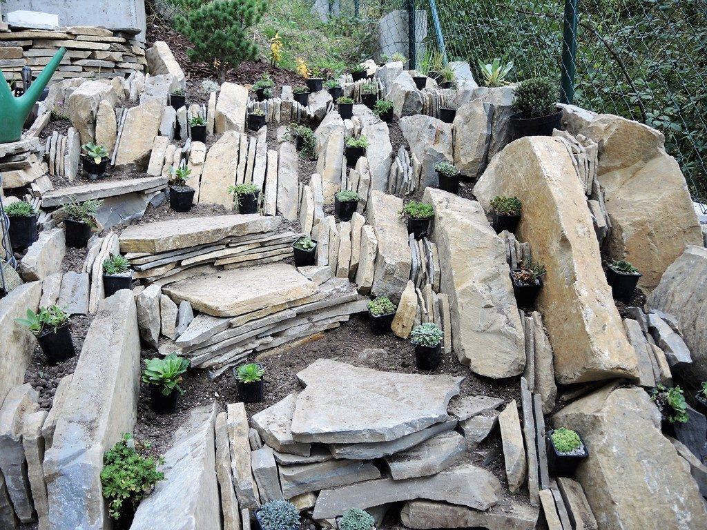 Rastliny-pripravené-na-výsadbu-do-pieskovcovej-špárovej-skalky-1024x768