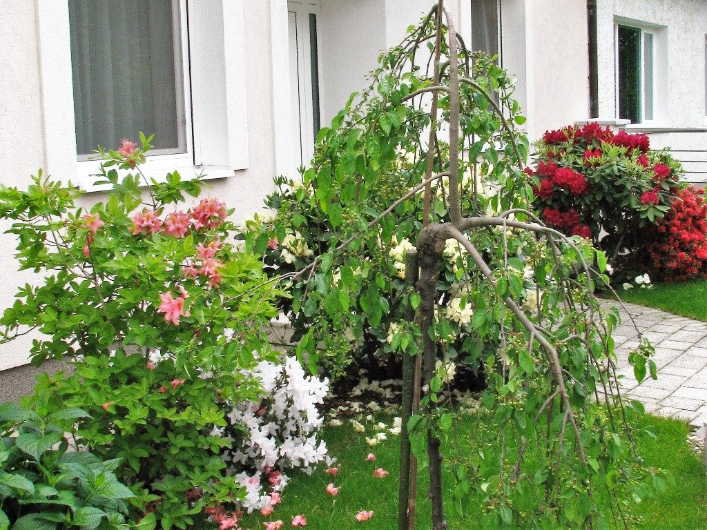 Výsadba-s-kvitnúcimi-drevinami-v-malej-predzáhradke-1024x768