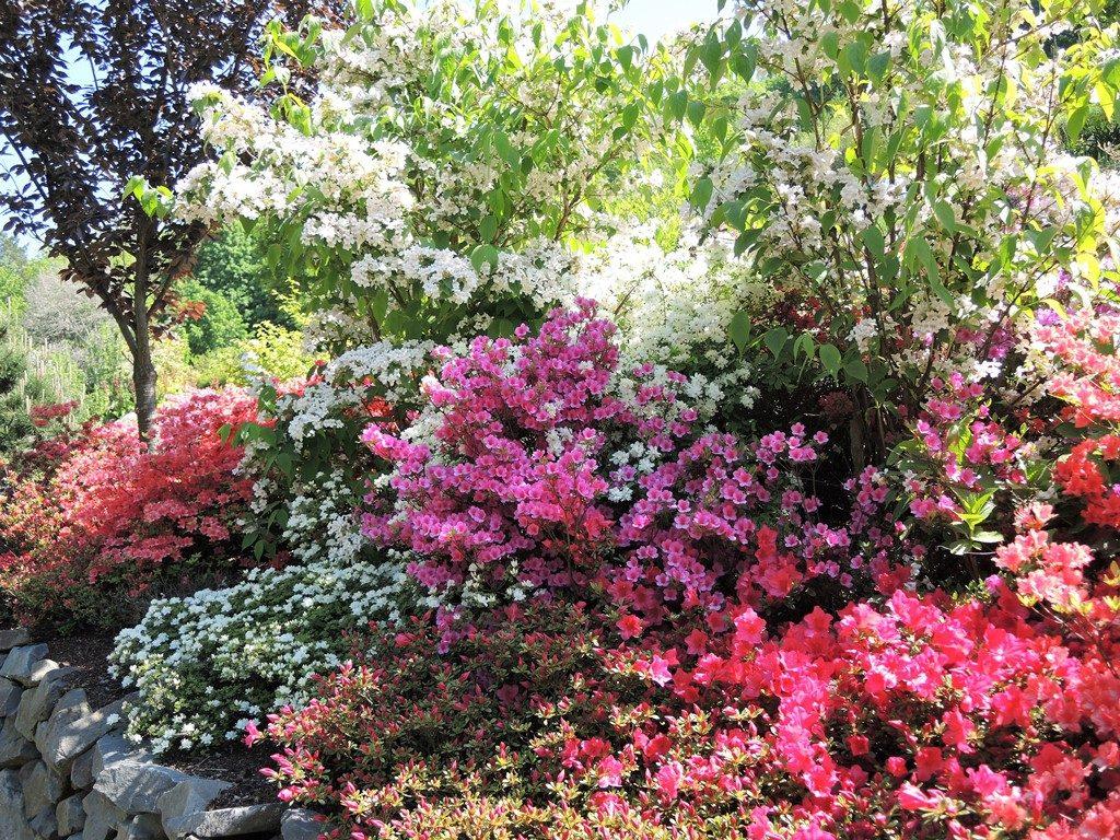 Výsadba-z-kvitnúcich-listnatých-kríkov-1024x768