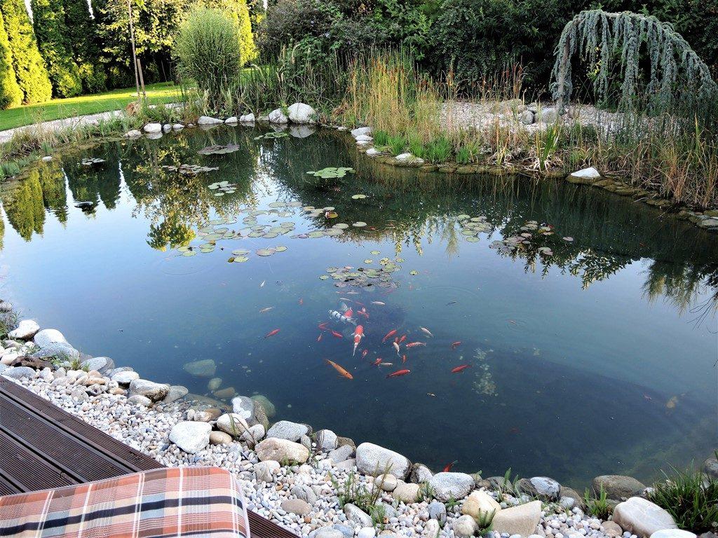 Záhradné-jazero-pre-okrasné-ryby-1024x768