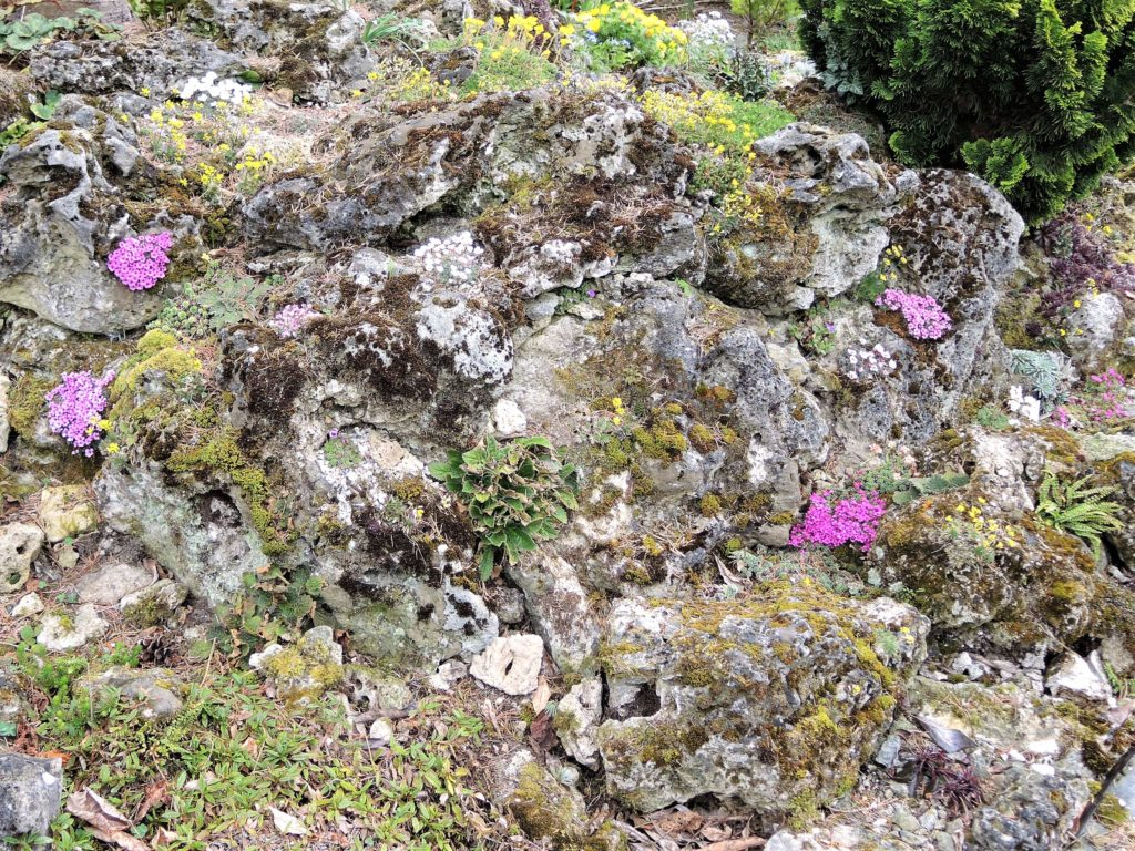 DSCN6403-2-Travertínová-skalka-s-kvitnúcimi-lomikameňmi-vo-včasnej-jari-1024x768
