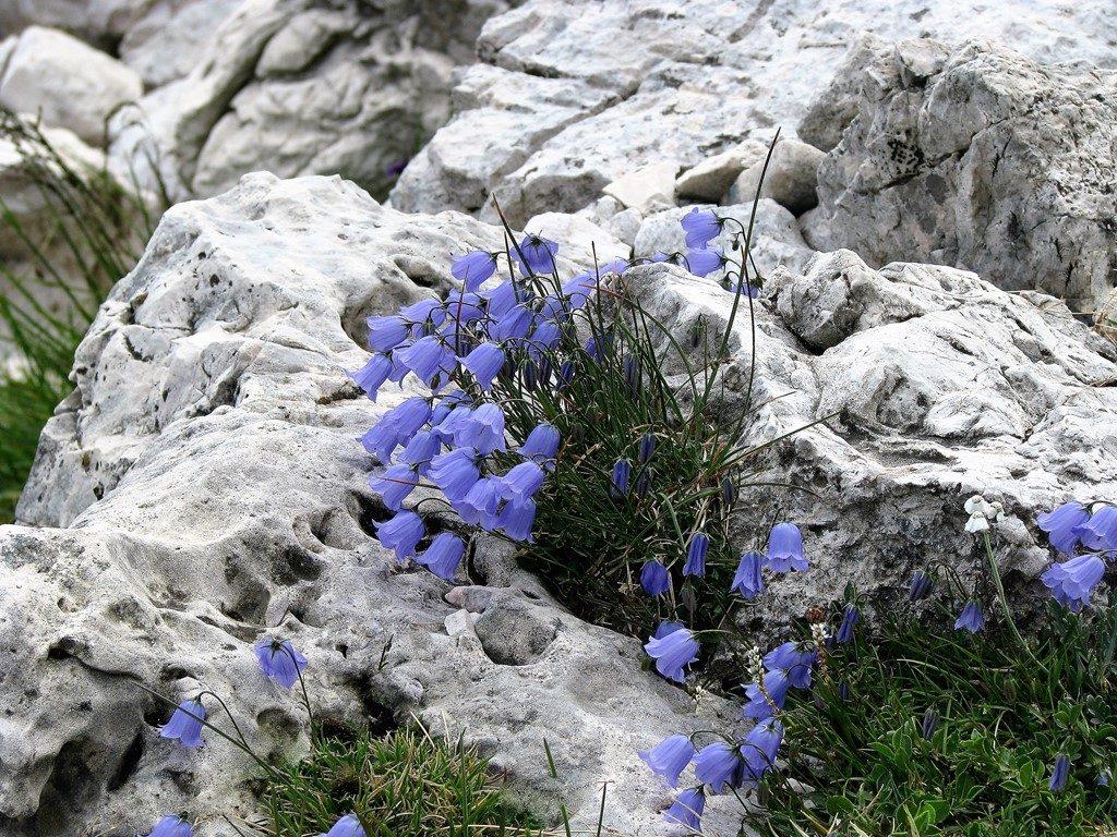 Dolomity-4.-6.8.2009-443-2-1024x768