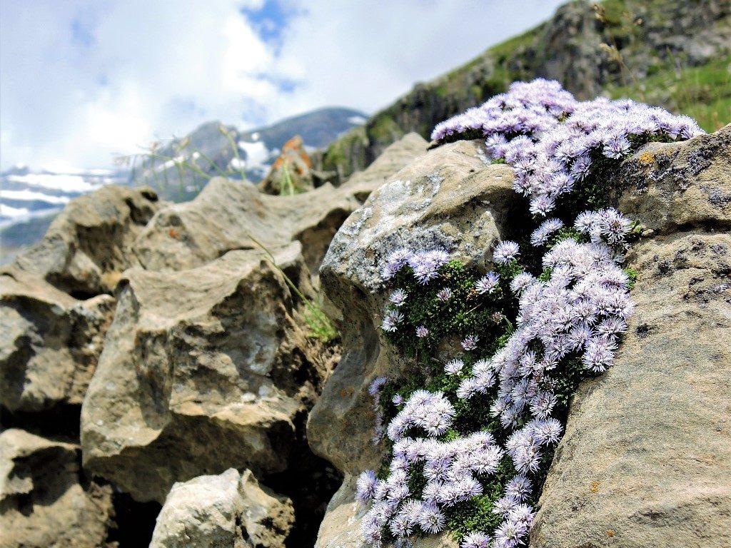 Pyreneje-júl-2013-1113-3-1024x768